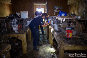 Miss puppy mill bust 3