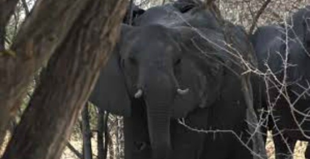 namibia-elephant-hunting
