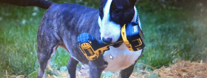 Dog falls ill after consuming hops