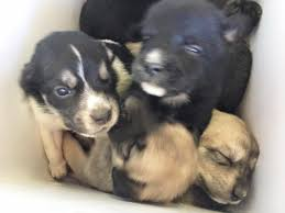 9-puppies-found-inside-of-cooler-2
