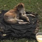 audubon-michigan-dogs