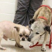 Bonded senior dogs