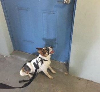 dog-left-abandoned-at-door