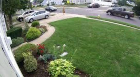 driver-kills-dog-in-levittown