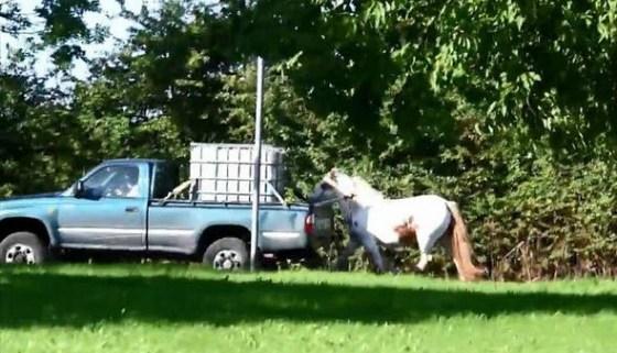 horse-dragged-thru-traffic