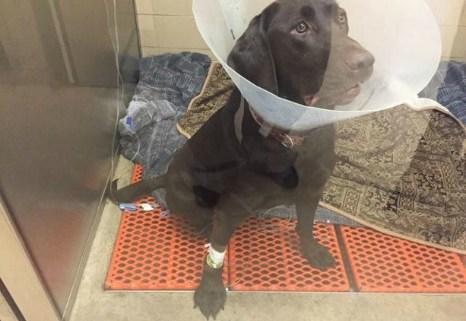 lyra-dog-poisoning