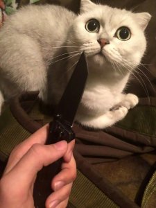 "Pic shows: one of the two girls is holding knife in front of the cat; A teenage girl has been arrested for torturing and killing cats and dogs with her friend and then posting the footage of their reign of terror online. Alina Orlova, 17, was arrested in the far eastern Russian city of Vladivostok where she was waiting for a connecting flight between her home city of Khabarovsk in south-eastern Russia to St Petersburg in the north-western part of the country. She and her friend, Kristina K., who likes to wear horror movie-style makeup and contact lenses, posted photographs and videos of themselves apparently torturing and killing cats and dogs for ""bloodlust"". The horrific images show one dog nailed to a wall as if it had been crucified and another hanging by its collar and then shot with an air gun. Other animals are seen dead - including one which the girls cut open to pull out its internal organs. Police became involved after animal lovers reacted with outrage to the graphic images that were posed on social media. Local residents started a petition calling on the authorities to do something about the teenage torturers. Both of the callous girls are students and live in the city of Khabarovsk in south-eastern Russiaís Khabarovsk Krai region. They said they had been adopting unwanted animals which they had promised to look after but instead they had tortured and killed them, posting photographic evidence online. Orlova is seen clutching a cute puppy with her mouth open wide as if she is about to bite it, and another image shows Kristina menacingly holding a hammer and a nail. Netizen ëDmitriy Dmitrieví said: ""Somebody should do the same to them, in the same manner they treat these animals."" And ëMaria Ivanoví added: ""OMG, I feel so bad after seeing it. One of the dogs that is still alive looks so adorable on the photo and is already hanging dead on the other one. ""How can their mothers defend it. I would have probably reported on my child if he did something like that. Horrible."" Orlova also posted that she was planning to kill her own mother, asking people how long she would have to stay in prison if she was caught. Kristina's family are believed to have close ties to the local police force in Khabarovsk, according to local media. Khabarovsk, the administrative centre of Khabarovsk Krai, lies just 30 kilometres (18 miles) from the Chinese border, at the confluence of the Amur and Ussuri Rivers."