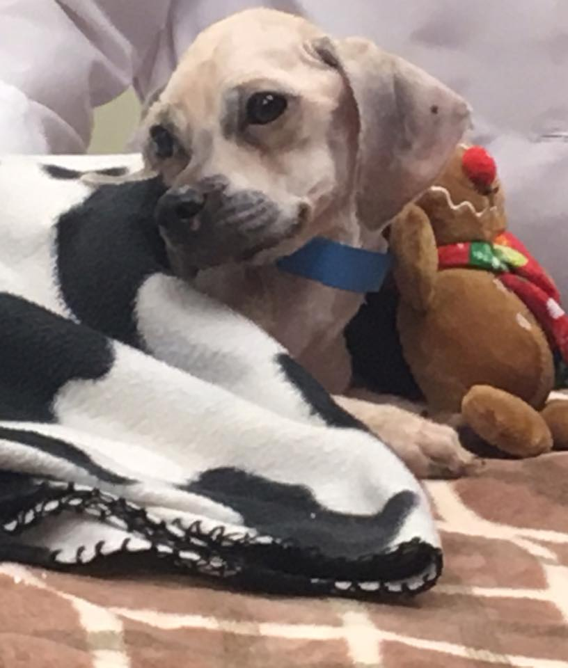 Emaciated dog has died