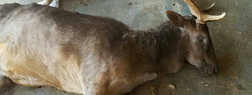 Pet deer shot and killed in Texas