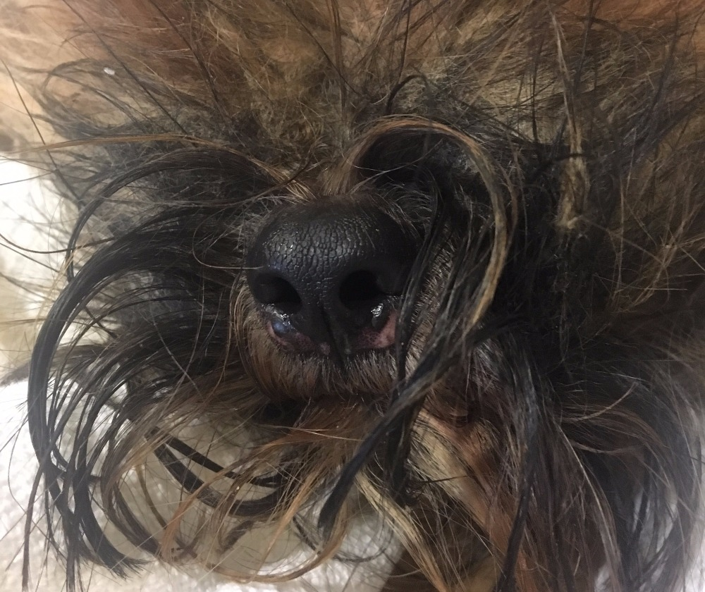 Emaciated dog thrown from car