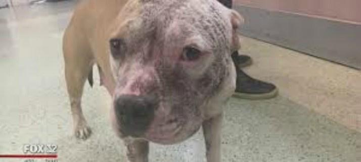 chicago-animal-shelter
