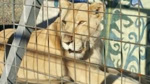 exotic-animals-seized-2