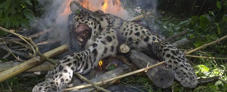 leopard-beaten-to-death