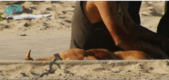 Woman shot after dog shot in California