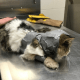 Investigation launched after cat found wrapped in duct-tape