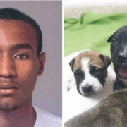 Man suspected of killing 4 puppies