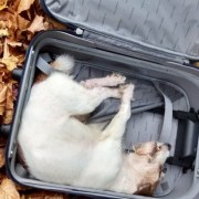 Woman's missing dog found in discarded suitcase