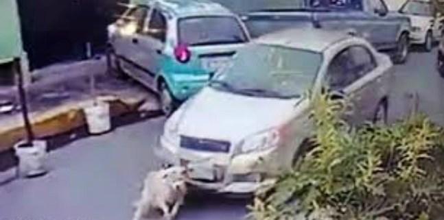 dog-run-over