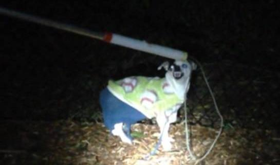 Angry dog found wearing an ugly sweater