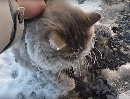 frozen-cat-2