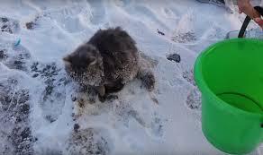 frozen-cat-3