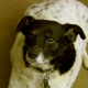 Veteran moving to assisted living - dogs need a new home