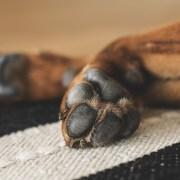 Starved dog discovered in food bag