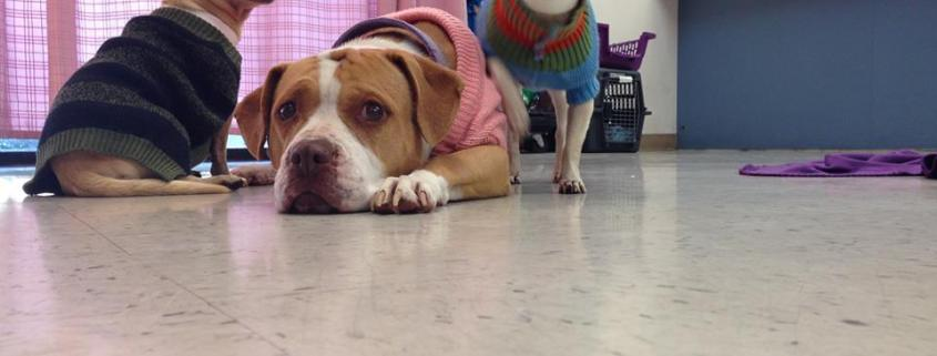 Bonded trio need a new home