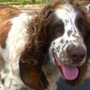 dog rescues baby possum