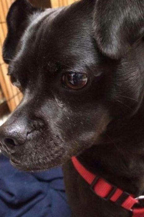 Rescued dog shot dead