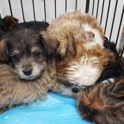 Shelter issues statement about puppies involved in accident