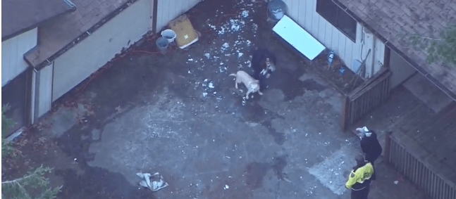 Dogs perished in fire at rescue facility