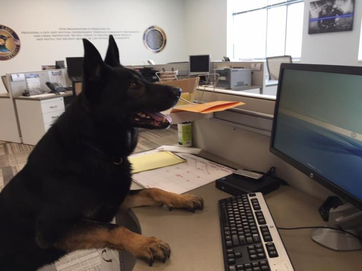 K9 died after traffic stop