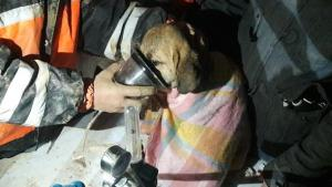 Dog saved from well