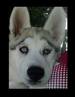 Thieves accused of breaking into home, stealing puppy
