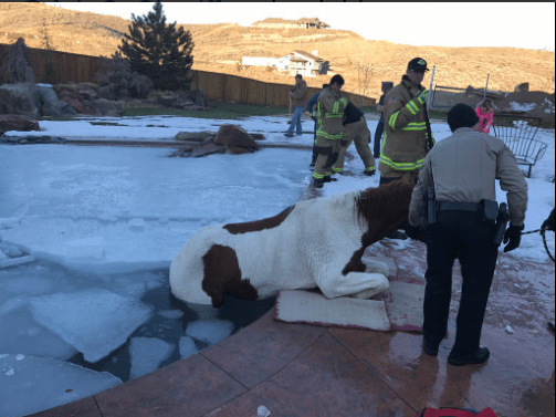 Horse trapped in ice-covered swimming pool