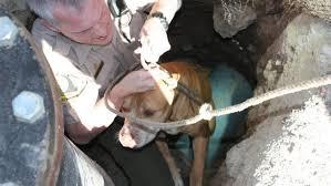 big Dog big rescue 2