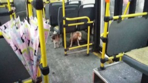 bus driver dogs