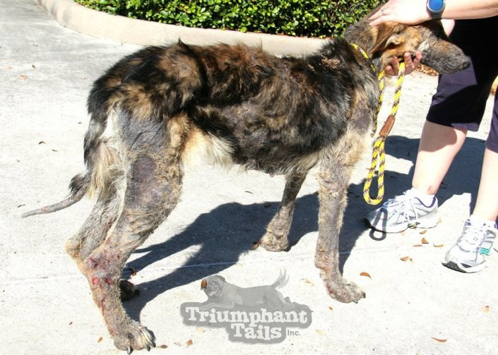 Dog was so badly neglected that she smelled like death