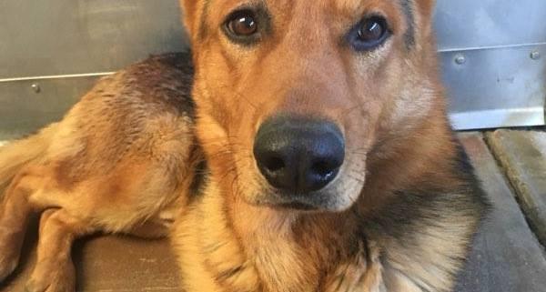 Dog sent to shelter after owner died