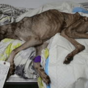 Owner charged for elderly dog's extended suffering