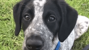 Bomb detection puppy shot dead at airport