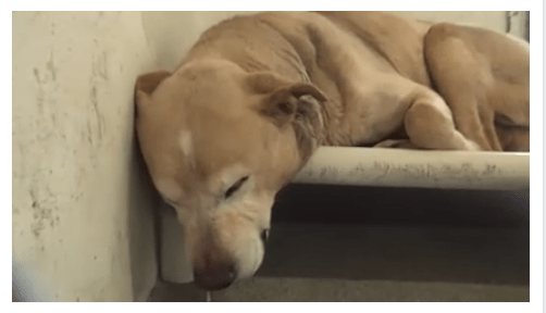 Sick and depressed dog needs out of shelter