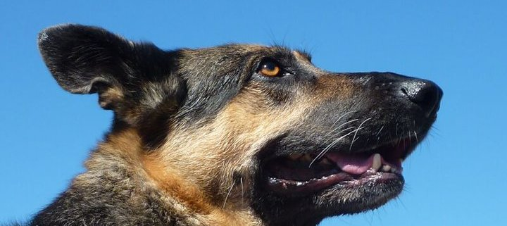 Dog gives life to save guests from suicide bomber