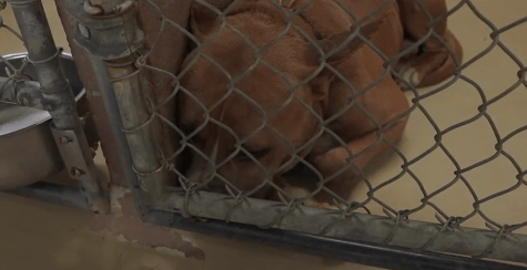 No holiday festivities for dumped dogs