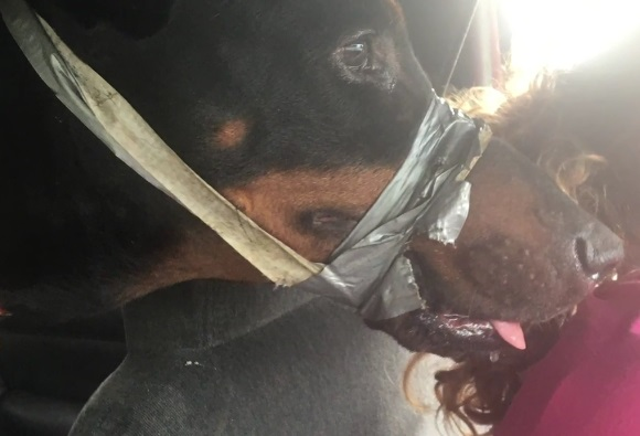 Dog with duct tape rescued in SC