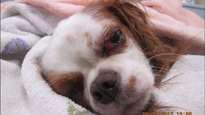 Dog critically injured