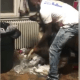 Video of man punishing dogs