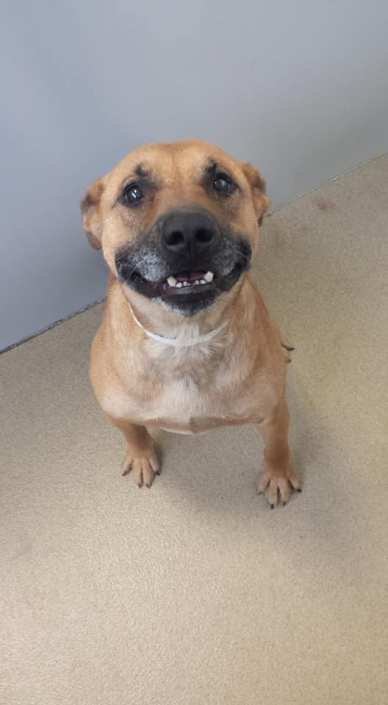 Confiscated dog smiles and begs for attention