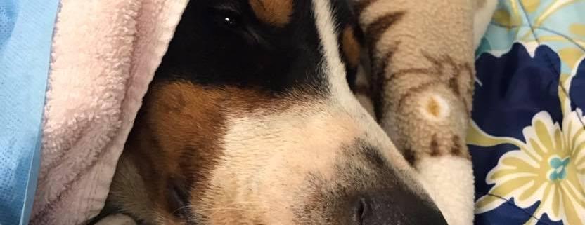 severely injured dog found beneath train